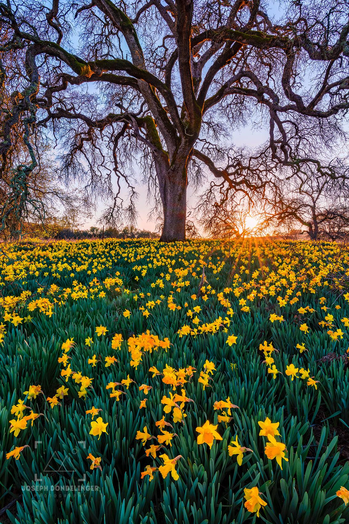 Incandescent Blooms